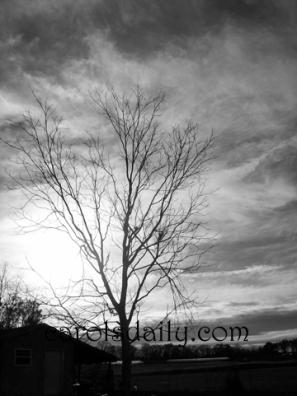 B/W tree