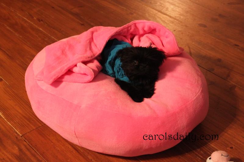 maggie bed blanket
